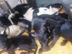 Cuccioli salvati (Screen Facebook)