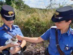 Gattina salvata dai Carabinieri (Screen Facebook)