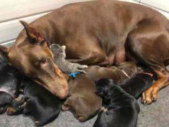 Ruby con tutti i suoi cuccioli (Screen Facebook)