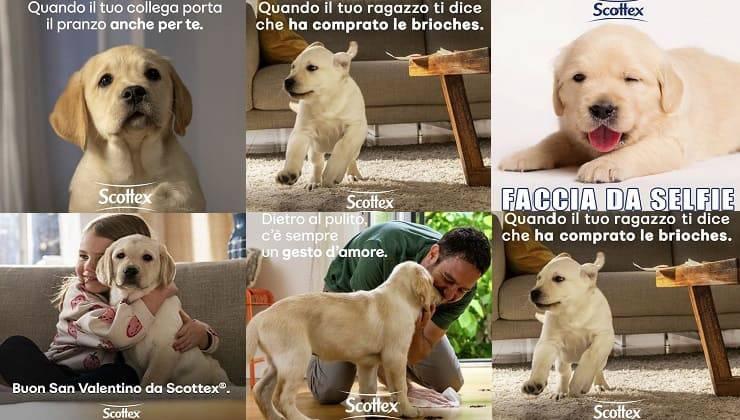cani della scottex