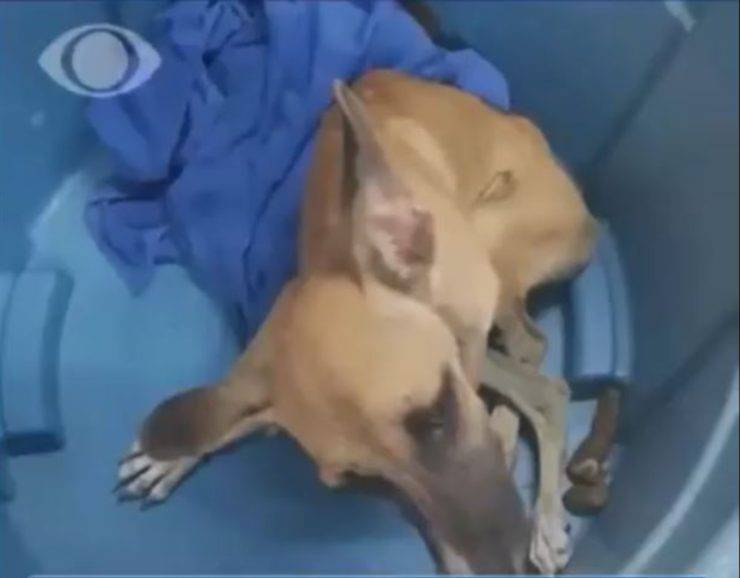 cane disabile rinchiuso cisterna acqua