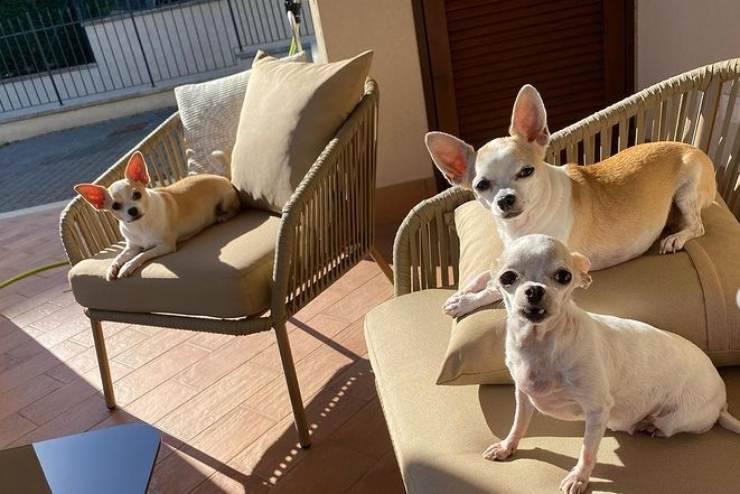 I cani di Valerio Scanu