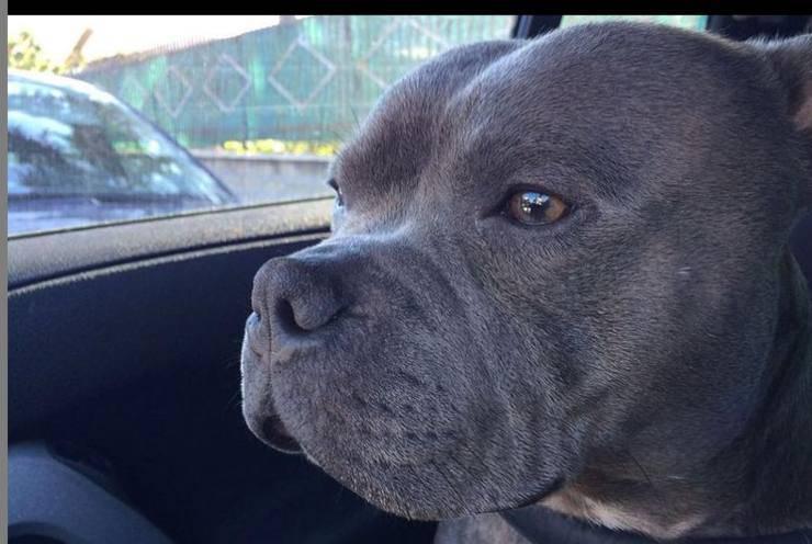Saki, il cane di Maria De Filippi