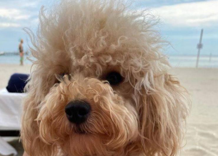 Grace, il cane di Adriana Volpe