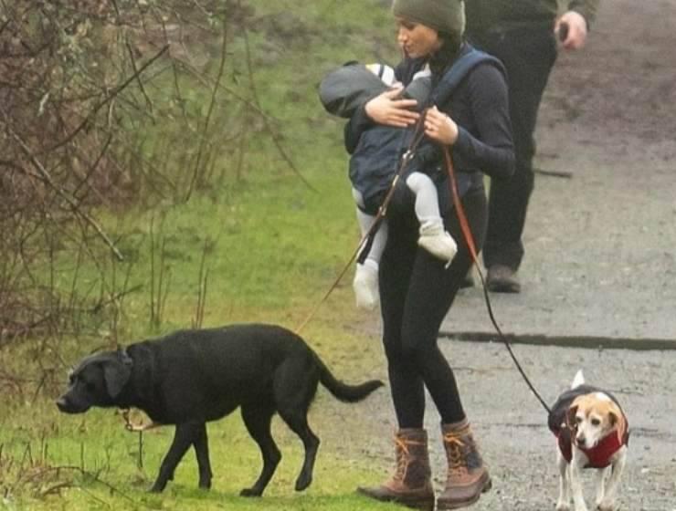 Meghan Markle e i suoi cani