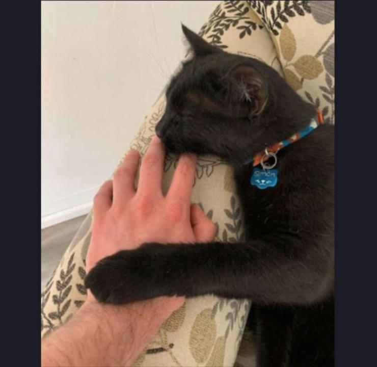 gatto amicizia topo