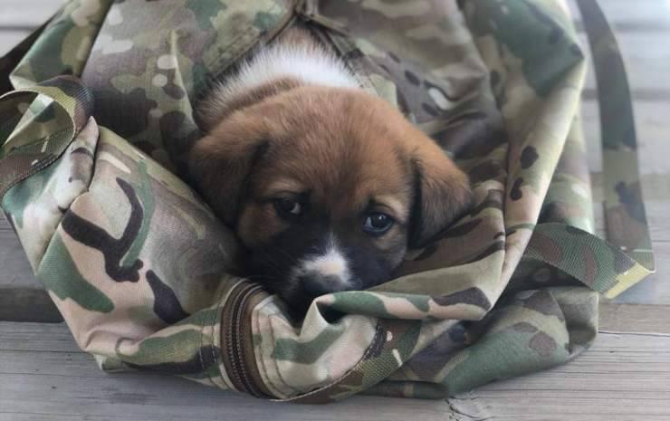 Un cane nella base militare (Foto Facebook)