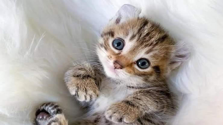 Gattino in primo piano (Foto Facebook)