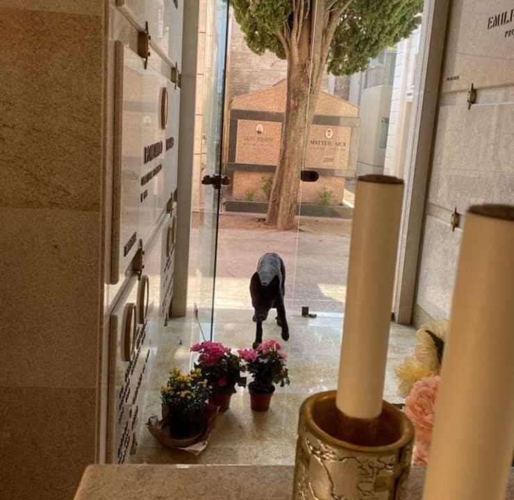 cane veglia tomba padrone cimitero