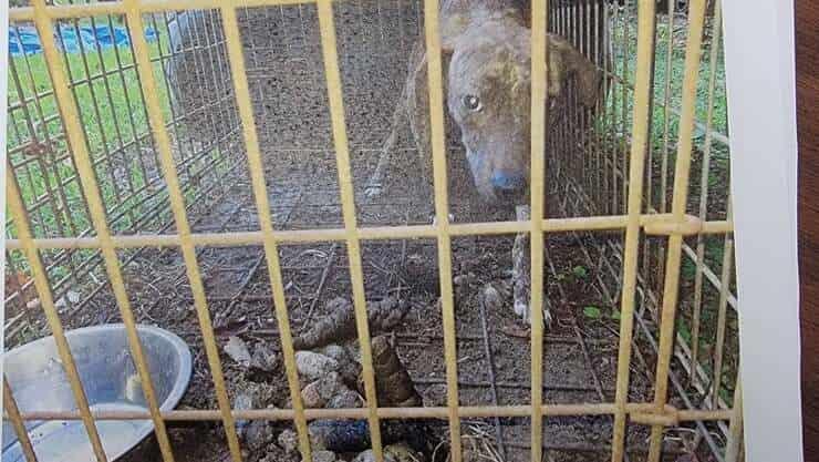 5 cani rinvenuti in condizioni pessime (Foto Facebook)