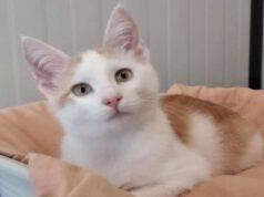 Uno dei gattini in cerca di adozione (Foto Facebook)