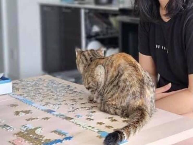 Il gatto trovato nello scatolone legato con il filo del telefono al collo ( Foto Facebook)