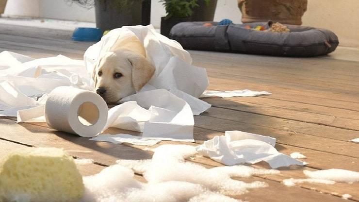 Cane della pubblicità Scottex