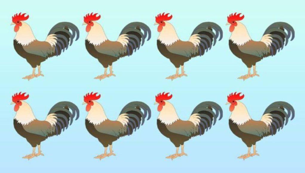 il test visivo del gallo diverso , solo il 2% riesce a risolverlo