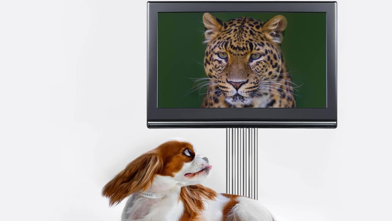 Il cane ha paura della tv