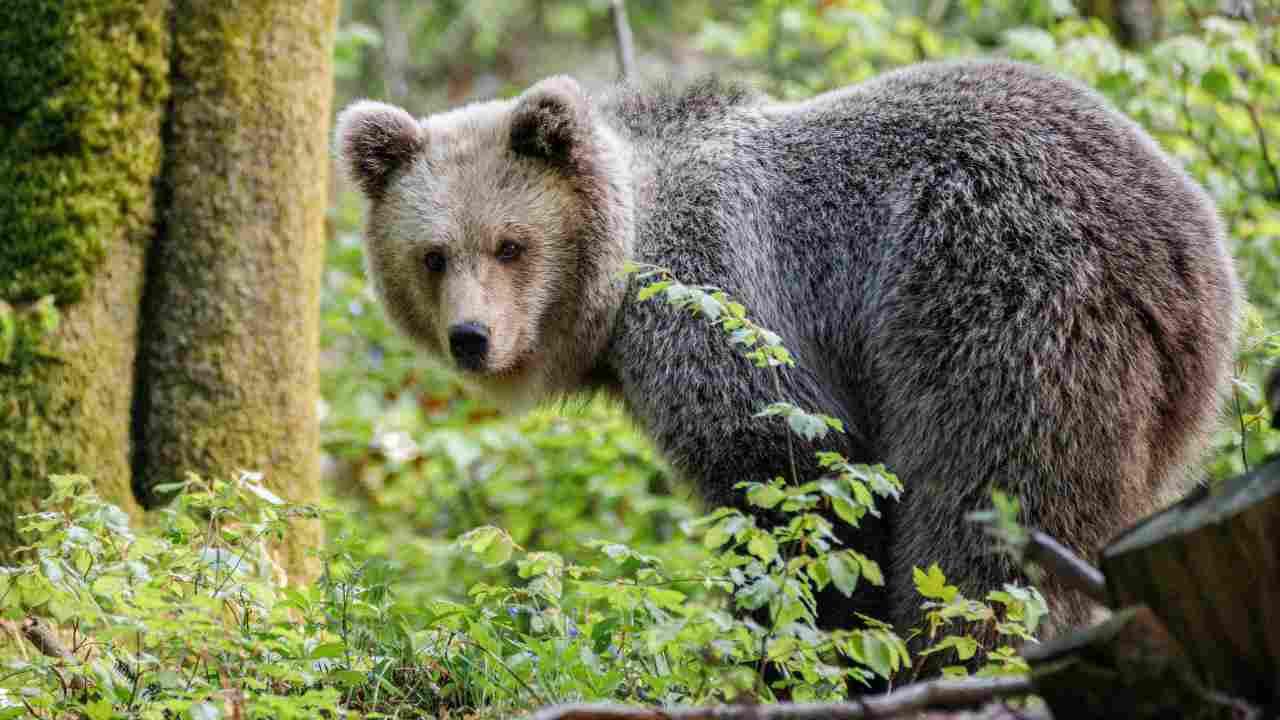 Le specie protette in Italia