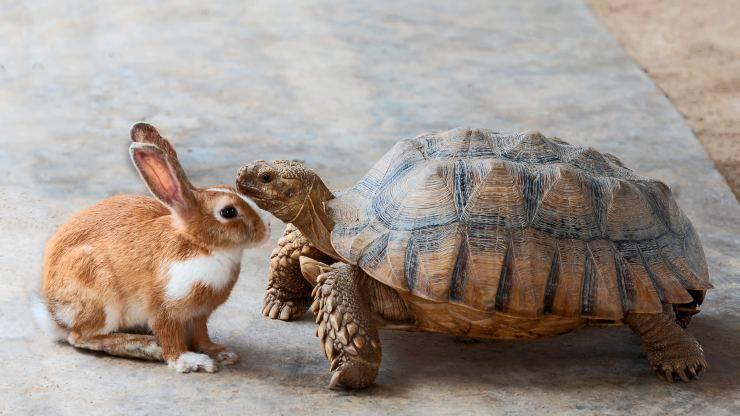 Convivenza tra tartaruga e coniglio