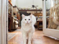 Come abituare il gatto agli ospiti in casa