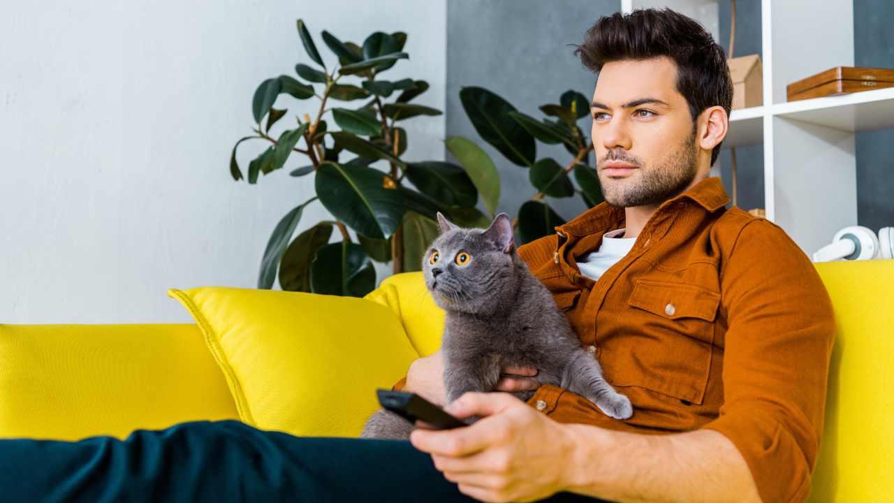 I gatti si spaventano se guardano un film horror?