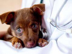 Trombocitosi nel cane