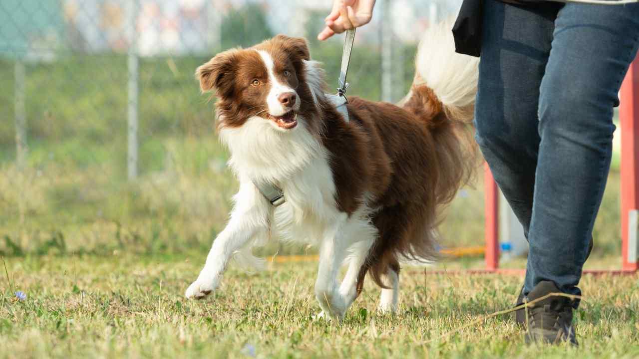 Legge area cani