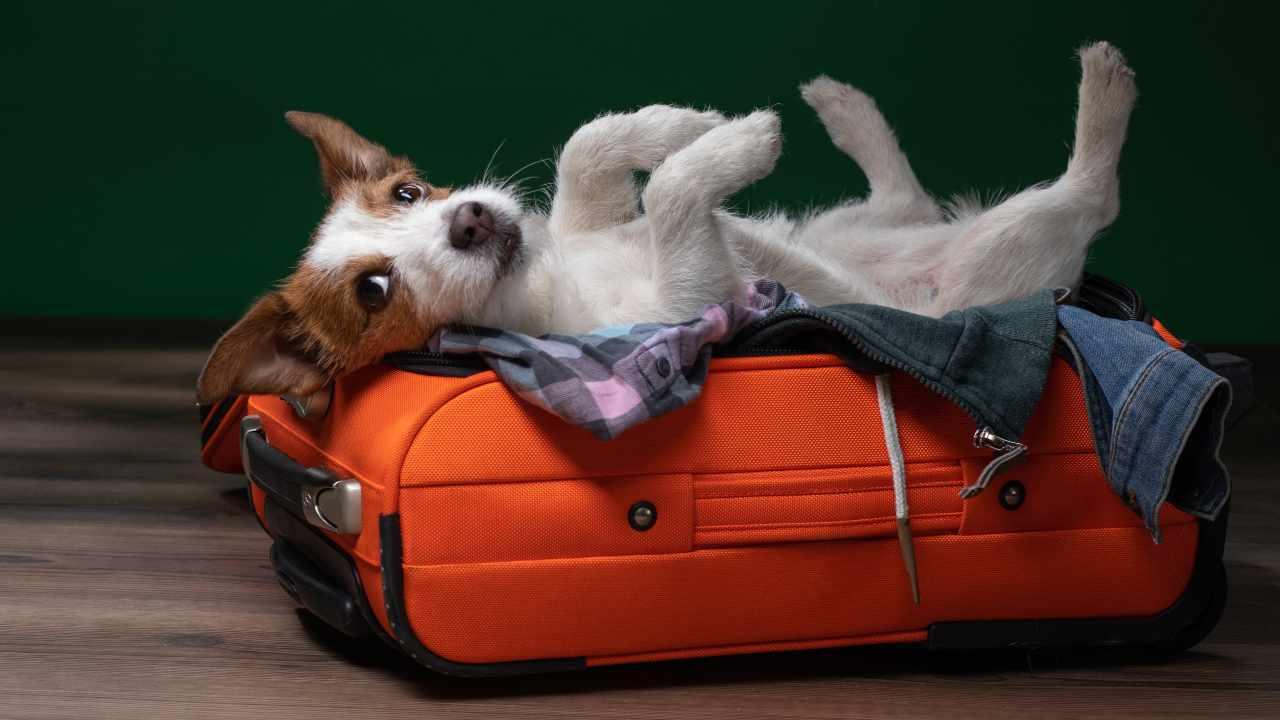 Viaggi con animali domestici verso Paesi extra UE