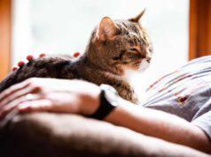 I gatti capiscono quando stiamo male