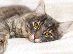Il gatto nell'anagrafe degli animali d'affezione in Abruzzo