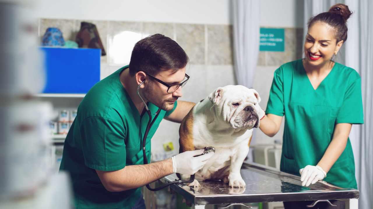 L'iperkaliemia nel cane