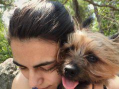 Adottare un Australian Silky Terrier