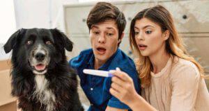 Esiste un test di gravidanza per cani?