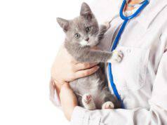Il gatto nell'anagrafe degli animali d'affezione in Veneto