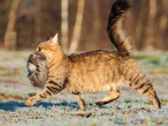 Riflesso di portage nel gattino