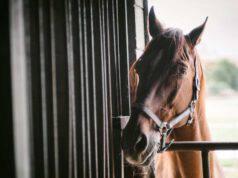 Piroplasmosi nel cavallo
