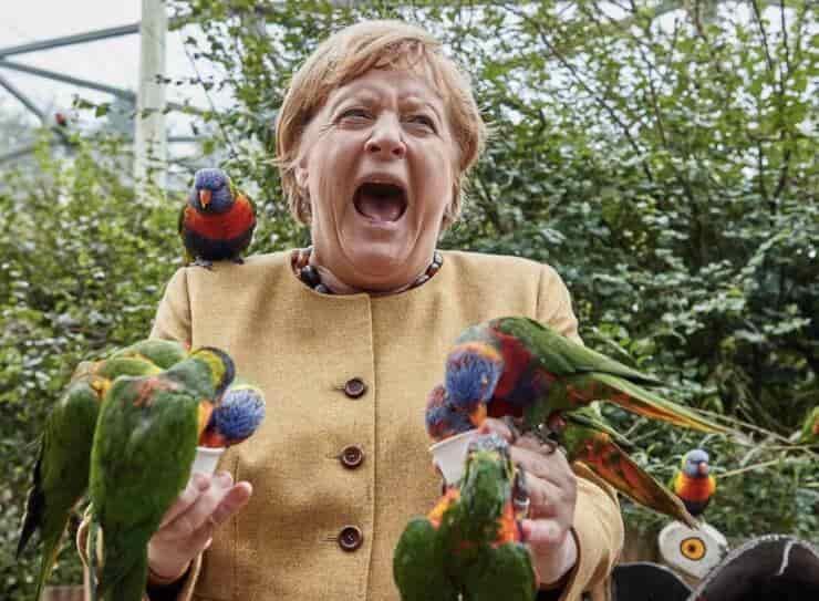 Angela Merkel insieme ai lorichetti (Screen Twitter)