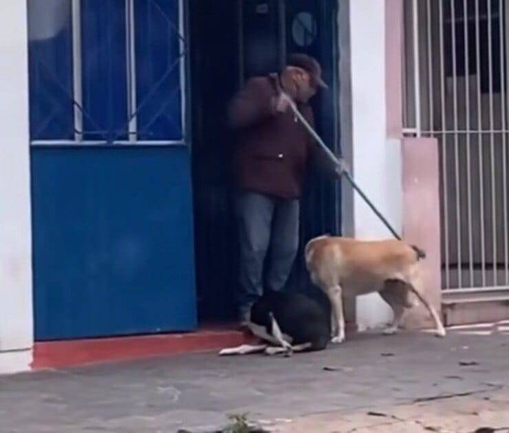 Anziano signore gioca con i cuccioli (Screen video)
