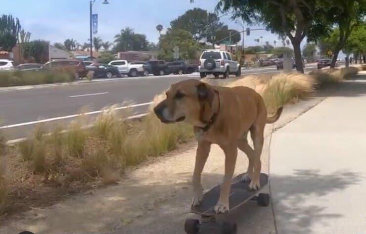 Bamboo sullo skate (Screen video)