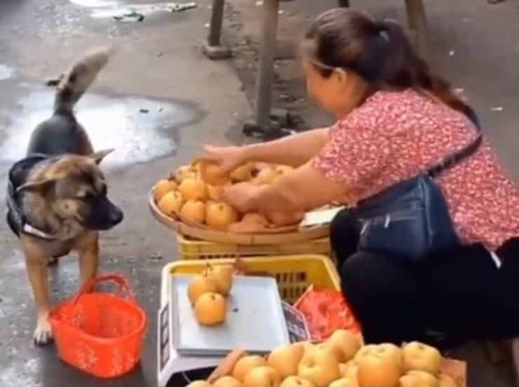 Cagnolina va al mercato per comprare delle mele (Screen video Twitter)