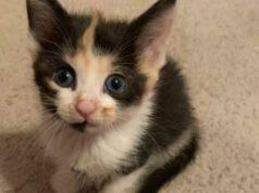 Candy Corn, gattina adottata