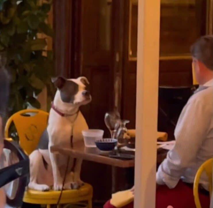 Cane a cena (Screen video)