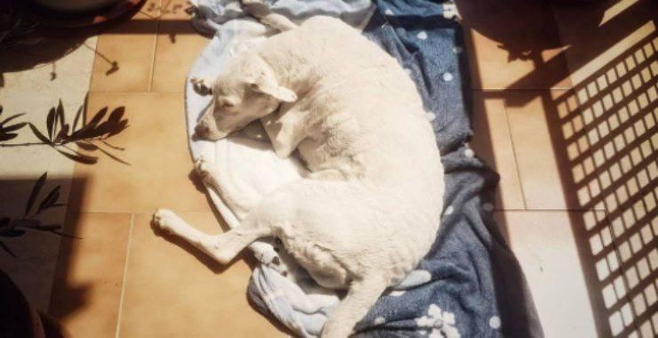 Cane al sole nella cuccia