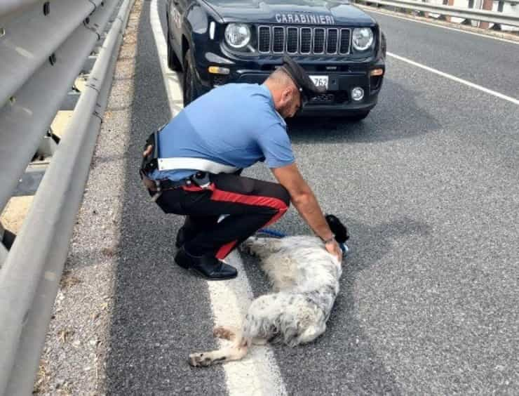 Cane salvato dal cavalcavia dai Carabinieri (Screen Facebook)