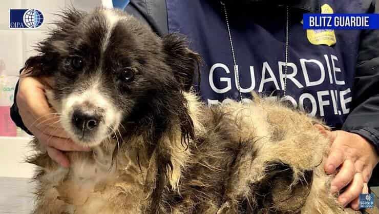 Cani durante la visita dal veterinario (Screen video)