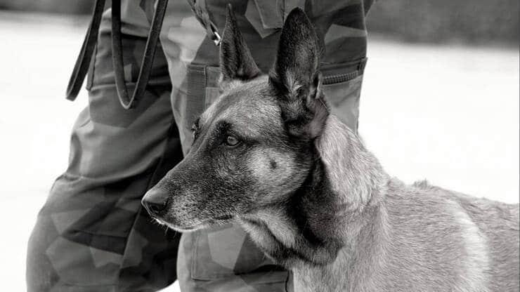 Cani militari (Screen Twitter)
