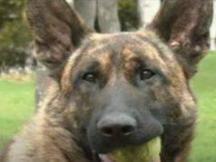 Il cane Dogo (Foto video)