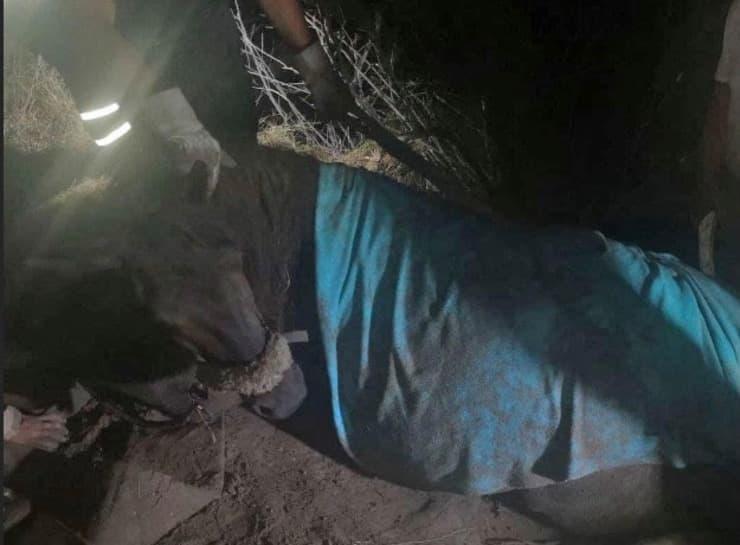 Cavallo intrappolato nel fango (Screen Facebook)