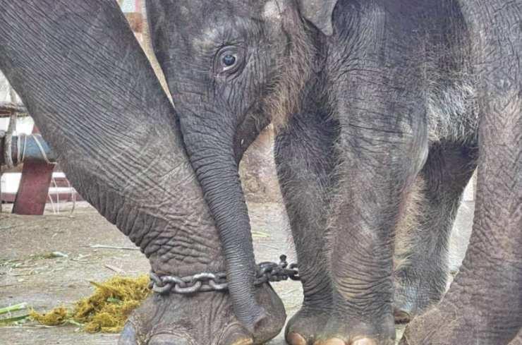 Chaba legata a sua madre da una catena