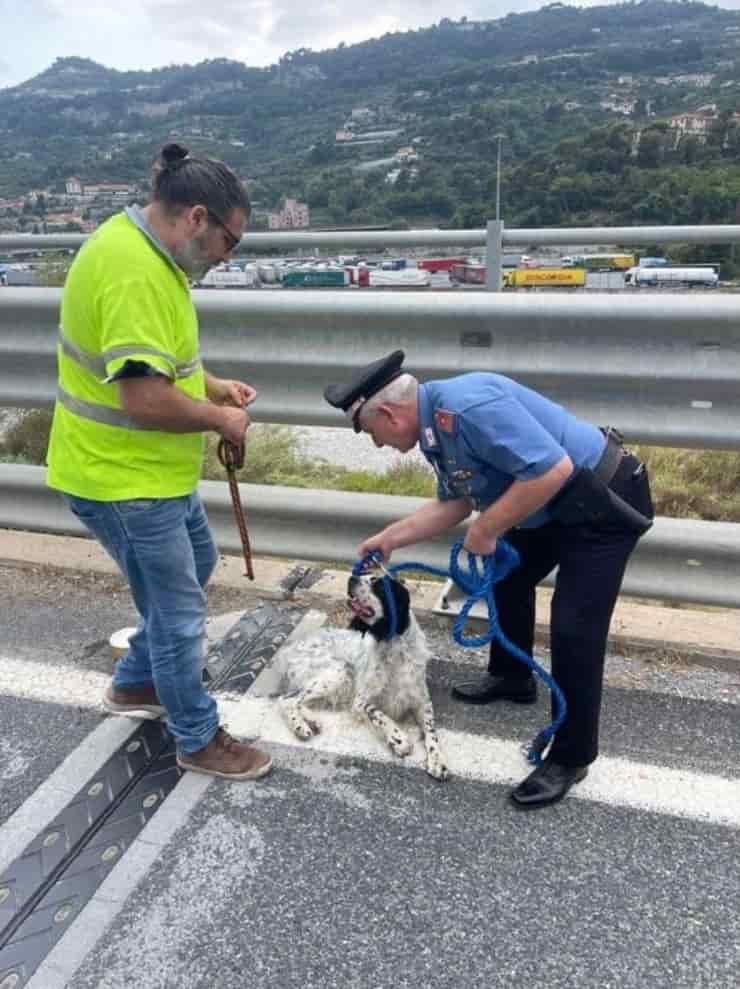 Cucciolo salvato sul cavalcavia (Screen Facebook)