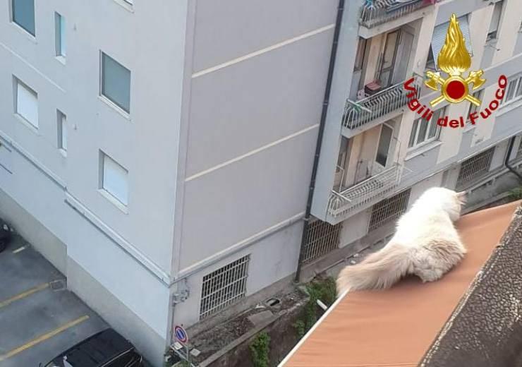 genova gatto cade ottavo piano