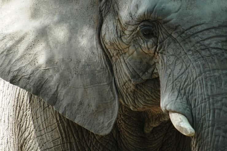 Elefante (Pixabay)